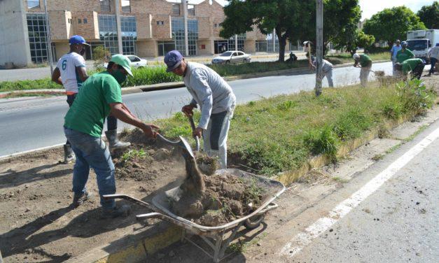 Alcaldía de Mariño adelantó trabajos de ornato en avenida Intercomunal Turmero–Maracay