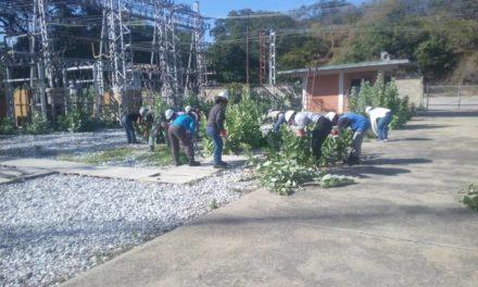 Continúa despeje de vegetación en subestaciones eléctricas de Aragua