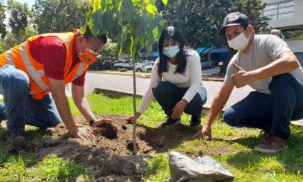 Gobierno Bolivariano convertirá en bosque policromático paseo Las Delicias de Maracay