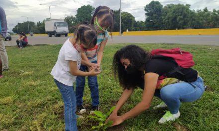 Realizada siembra de árboles en Jardín Bicentenario de Linares Alcántara